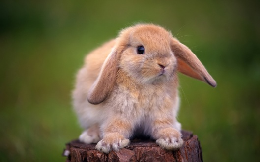 Cute-rabbit-standing-on-a-tree-stump_1920x1200